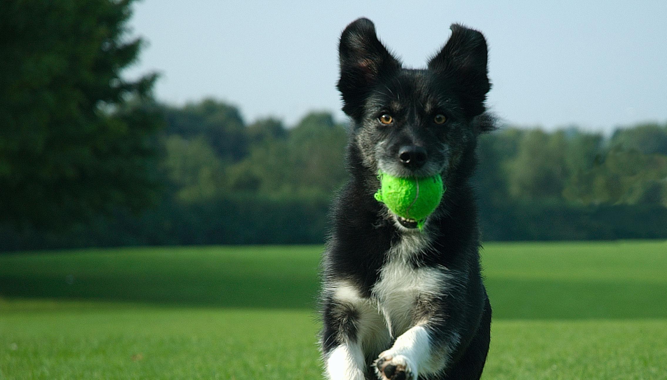 5-dog-training1