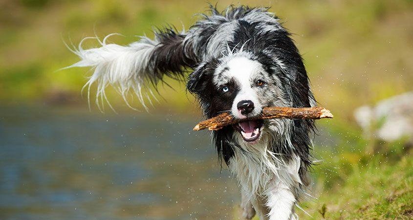 6-steps-to-teaching-your-dog-to-fetch_0