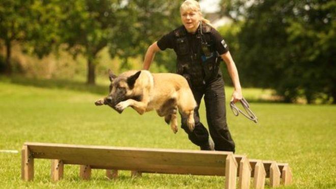 _63874806_policedog_gwent2