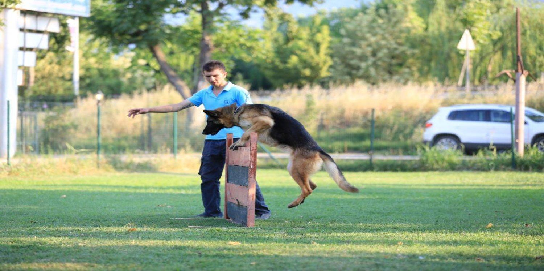 En iyi Köpek Otelleri