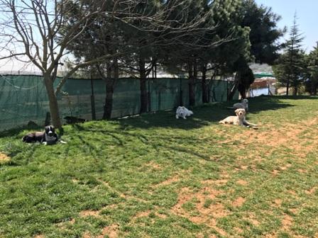 Beşiktaş Köpek Eğitim Merkezi