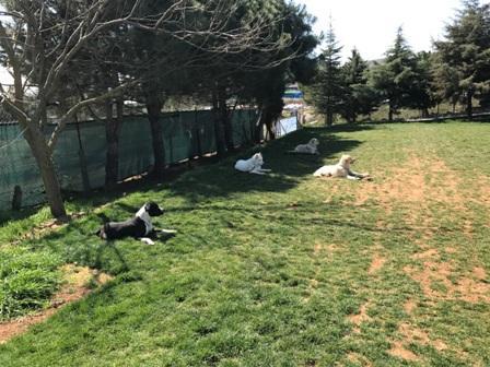 Köpek Eğitimi Sultangazi Adresi