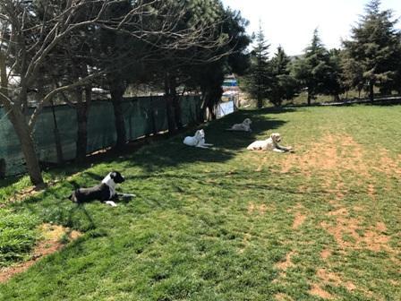 Eyüp Köpek Eğitim Merkezi