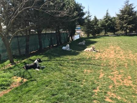 Doberman Köpek Eğitimi Eğitmeni