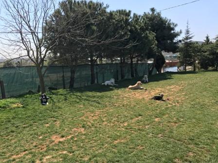 Esenler Köpek Eğitim Çiftliği İstanbul