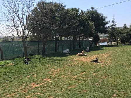 Maltepe Köpek Eğitim Merkezi