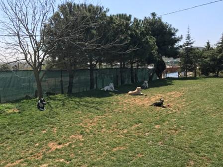 Güngören Köpek Eğitim Merkezi