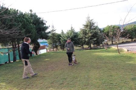 Presa Canario Köpek Eğitimi
