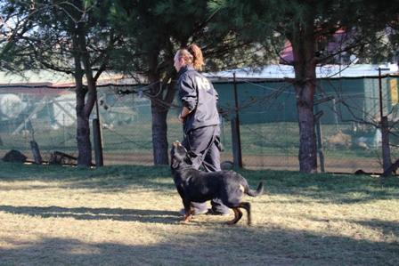 Köpek Eğitimi Pug İstanbul