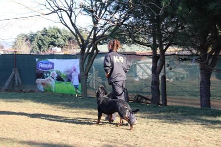 Beykoz Köpek Eğitim Merkezi
