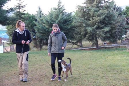 Newfoundland Köpek Eğitimi