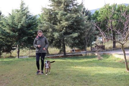 BullMastif Köpek Eğitimi Eğitmeni