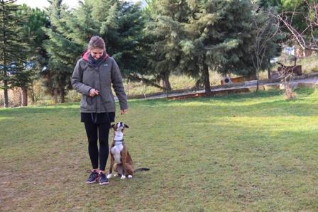 Greendog köpek oteli